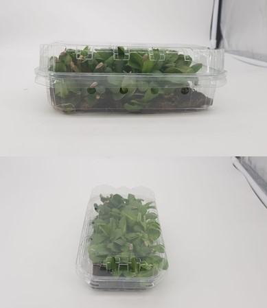 Esempio di confenzionamento industriale di porzioni di microverdure (cardo) pronto al consumo.