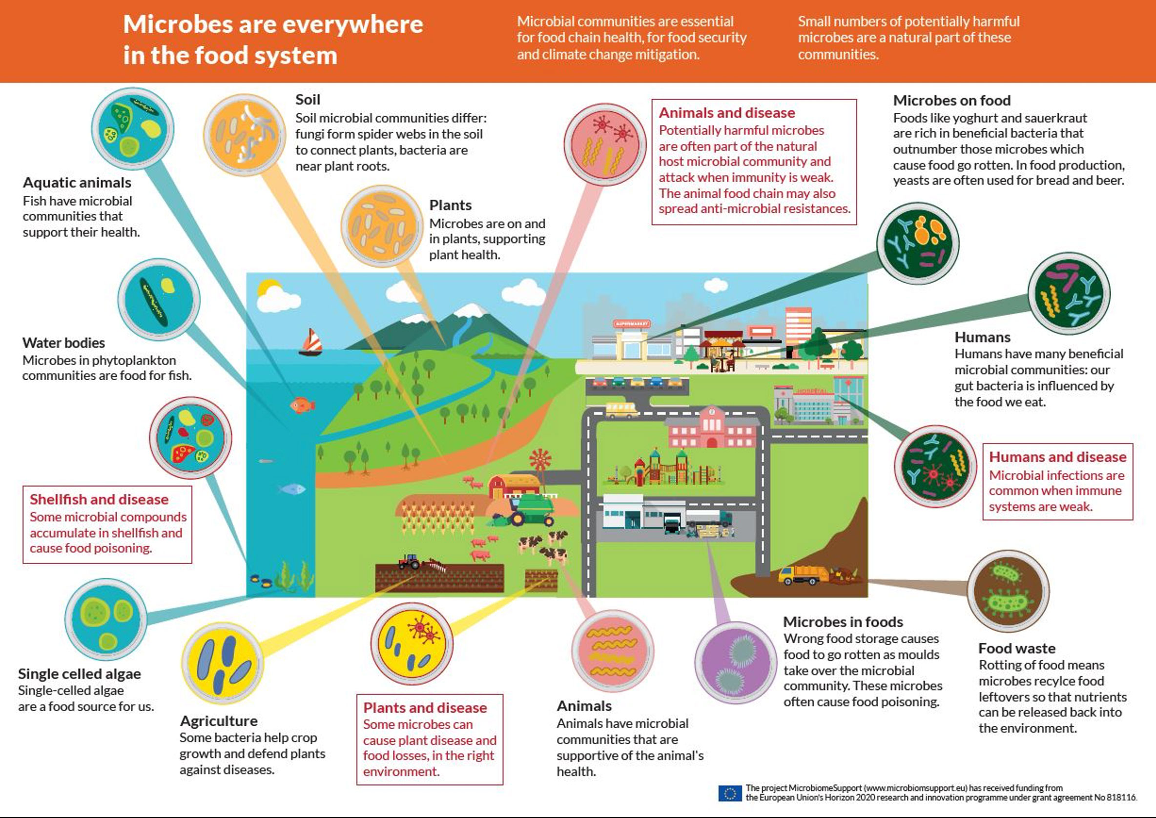 Prodotto grafico realizzato nell'ambito del Progetto europeo Microbiome Support Action (https://www.microbiomesupport.eu/wp-content/uploads/2020/06/A4-infographic.jpg), mostra come i microrganismi siano presenti dovunque nell'intero sistema alimentare (ambienti acquatici, organismi animali, suolo, radici, foglie piante, alimenti, rifiuti). I microrganismi sono essenziali per la salute delle piante, degli animali, dell'uomo e dell'ambiente, per la qualità e sicurezza alimentare, nonché nei processi di decomposizione dei rifiuti alimentari; intervengono nell'accelerare o mitigare gli effetti dei cambiamenti climatici sulla salute dell'ambiente.