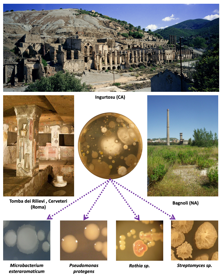Esempio di isolamento e identificazione di microrganismi. Al centro della figura c'è una piastra Petri, per la coltura di microrganismi, contenente un terreno nutritivo solido sul quale sono cresciute colonie di batteri e funghi provenienti da campioni prelevati da diversi siti. Le immagini relative ad alcuni siti di campionamento sono poste nella parte alta della figura e ai lati della foto della piastra. In alto c'è la foto panoramica della miniera dismessa di Ingurtosu (Ca), a sinistra la foto dell'interno della Tomba Etrusca dei Rilievi (Cerveteri, RM) e, a destra, quella dello stabilimento siderurgico dismesso di Bagnoli (Na). In basso, ci sono le immagini di alcuni ceppi di batteri isolati con sotto il nome di ognuno. Ogni foto è collegata alla foto della piastra Petri centrale da frecce viola tratteggiate.