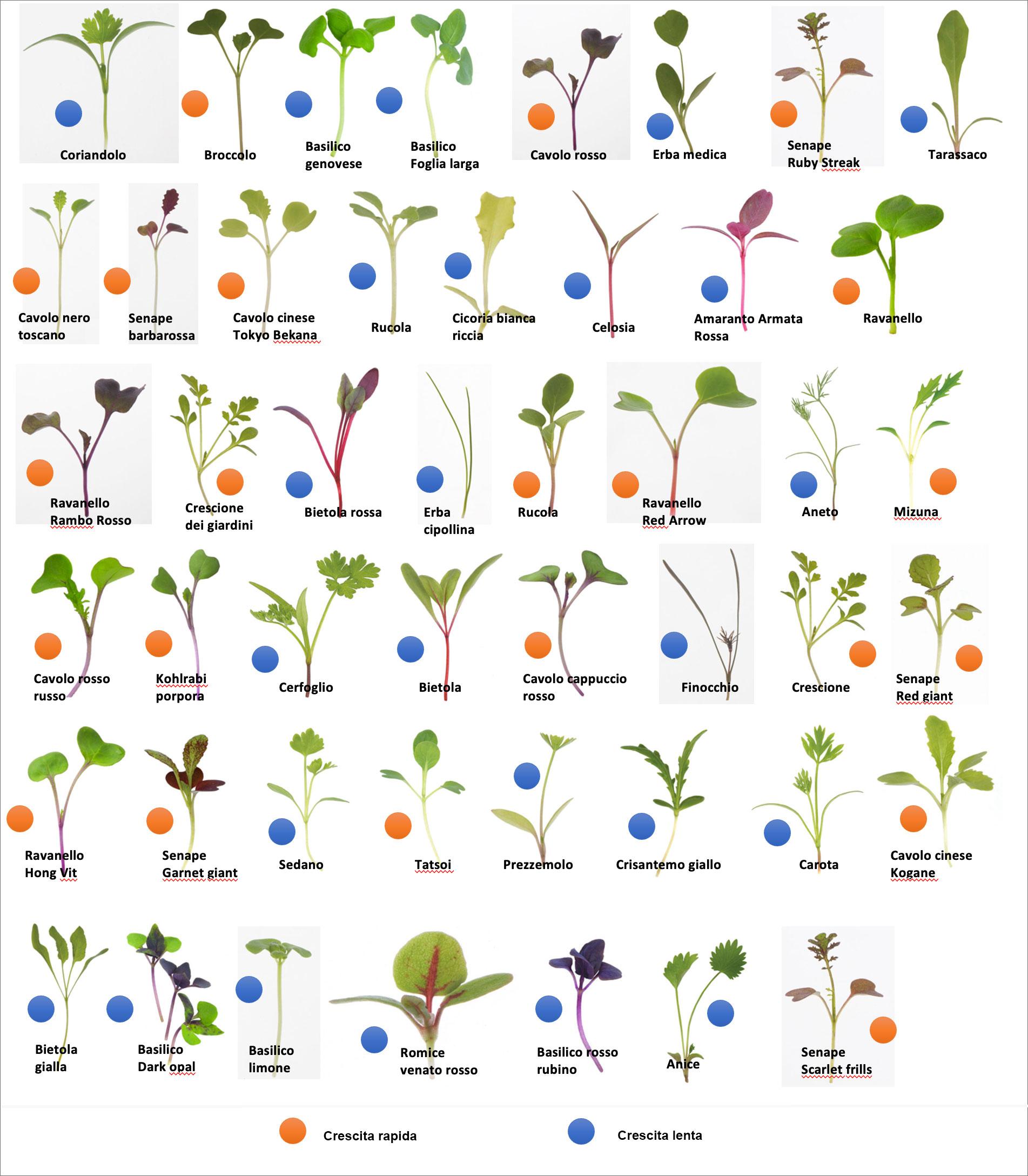 Una serie di piantine di varia specie disposte su sei file di 8 ciascuna